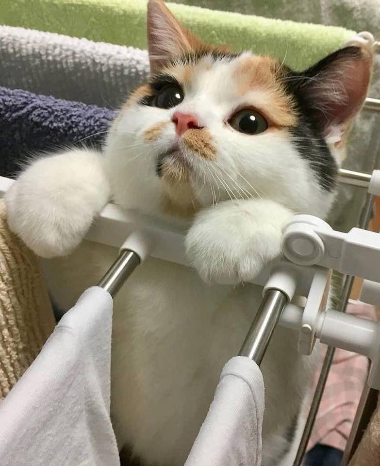 On Twitter In 2020 Best Cat Gifs Cute Cats Kitten Meowing