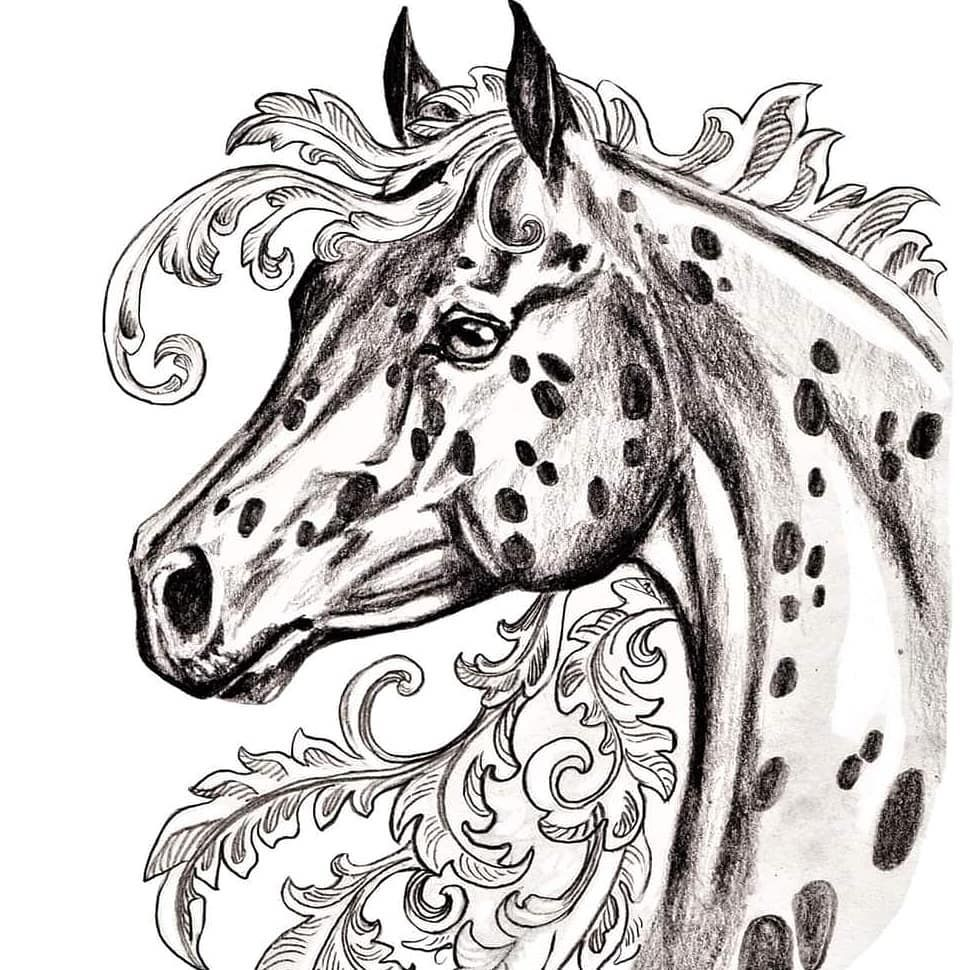 Pin On Appaloosa Horse [ 970 x 970 Pixel ]