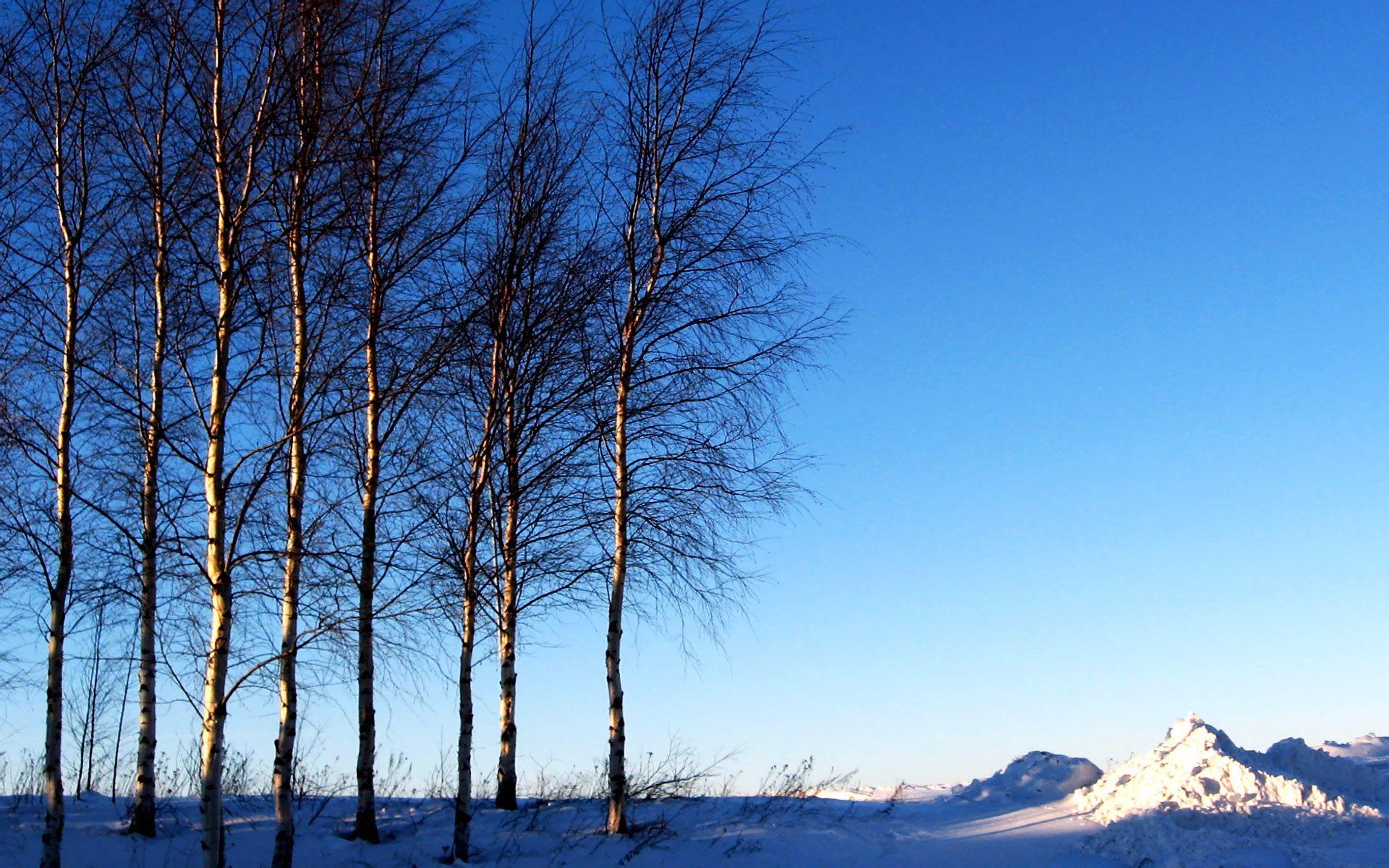 High Resolution Winter Snow Winter Snow Scenes Dreamy Winter Snow Wallpaper High Resolution Winter Snow Wallpaper Blue Sky Wallpaper Snow Scenes