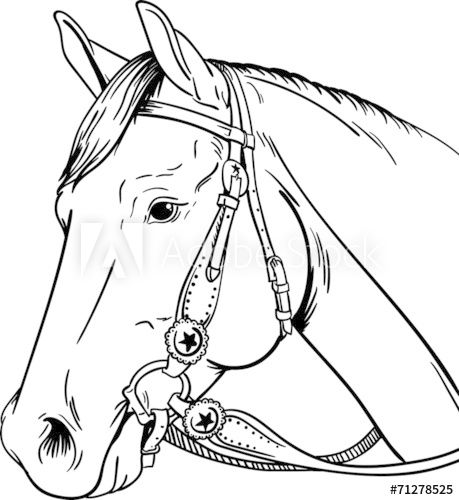 Western Horse Horse Coloring Pages Horse Head Drawing Horse Coloring Books