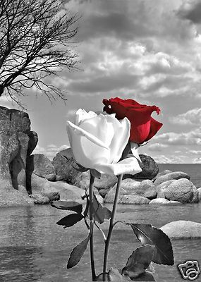 Black White Landscape Background With A Red Rose And A White Rose Scenery Background Black And White Landscape Black And White Pictures