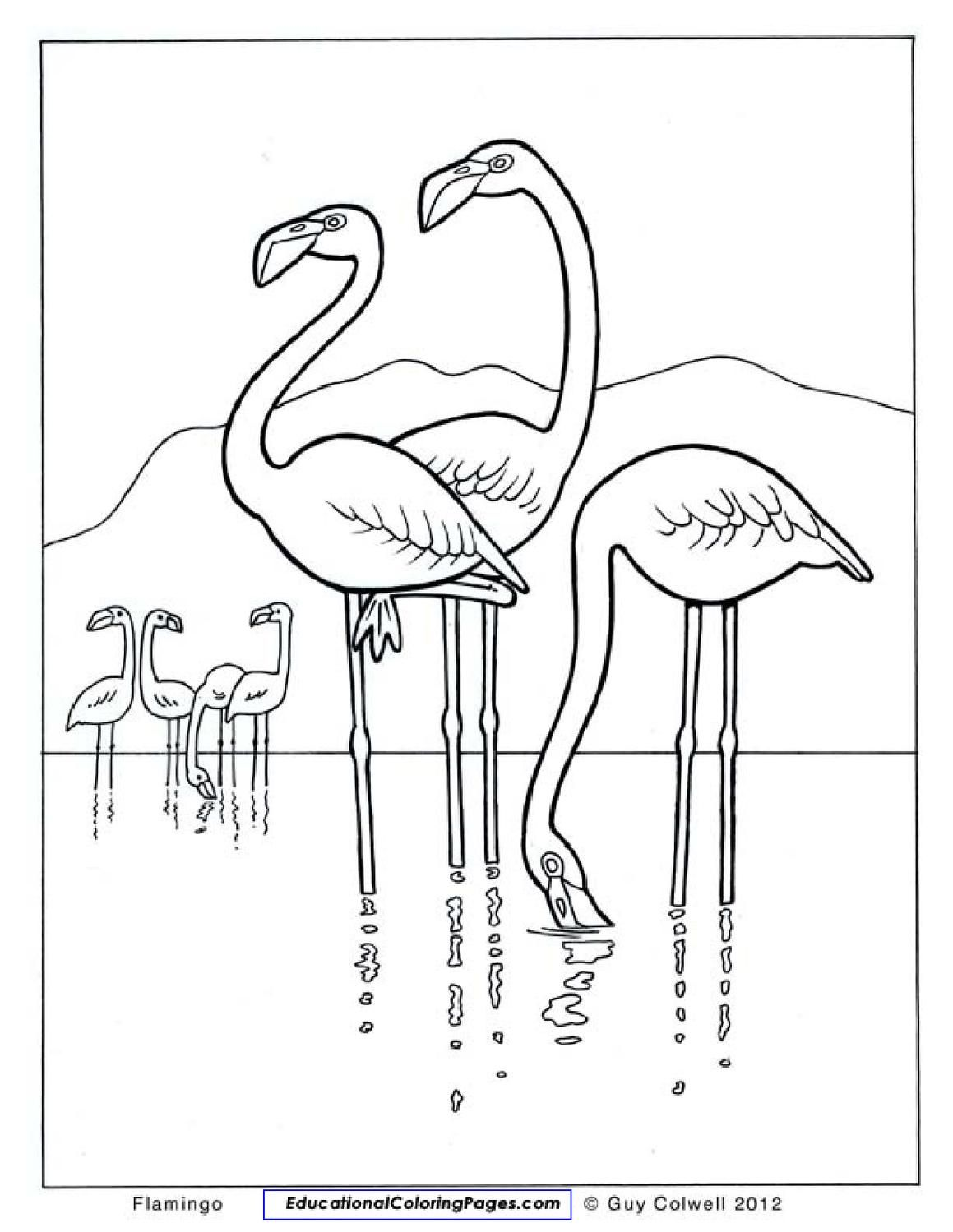 Natural Coloring Books | Zoology, Wild animals and Coloring books