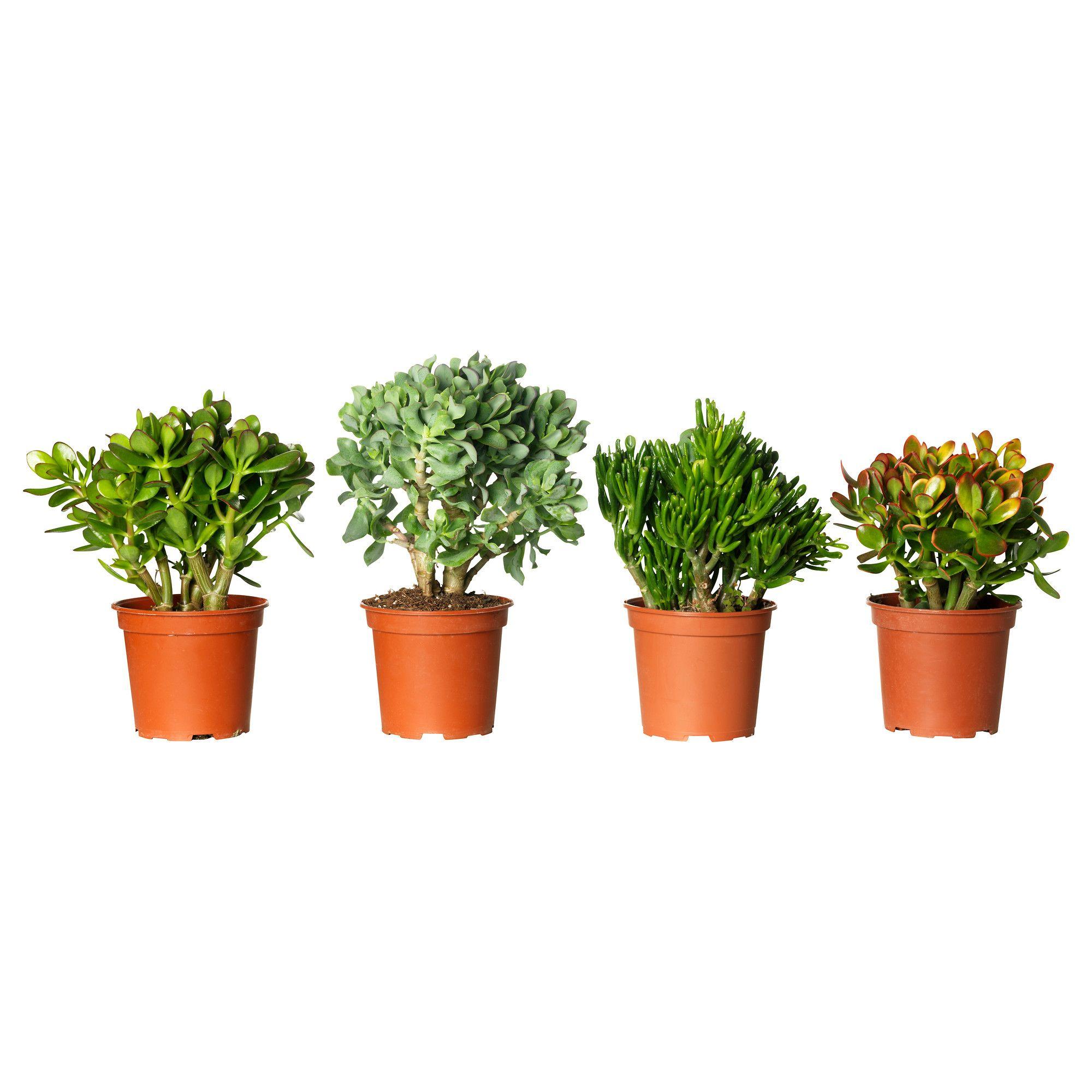 Crula Potted Plant Ikea