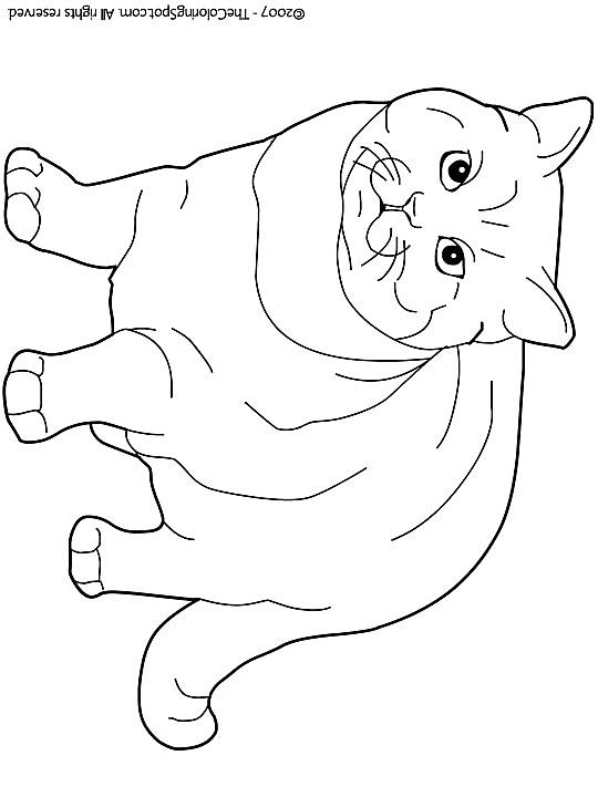 Quatang Gallery- Kleurplaat Kleurplaat Poezen 3785 Kleurplaten Dieren Huisdieren