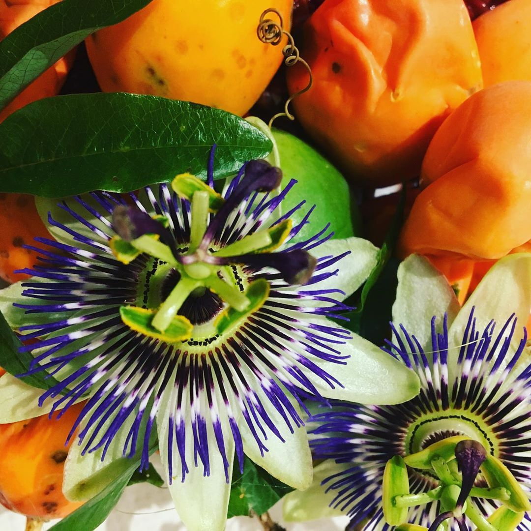 Harvested The Passion Flower Caerulea Fruits For Collecting The Seed For Growing And Sharing A Lot Had Already Fallen Off Frui Passion Flower Fruit Harvest