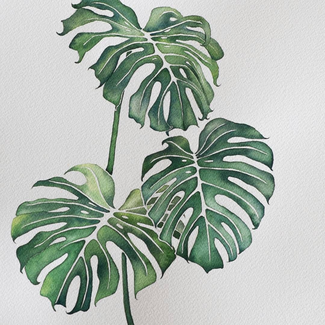 Watercolor Green Plants Monstera Nature Posters And Prints: Monstera Watercolor Art. By Daisy Del Rosario (@lexo