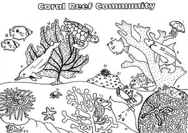 Coral Reef Fish Community Coloring Pages Kids Play Color Coloring Pages Fish Coloring Page Jesus Coloring Pages