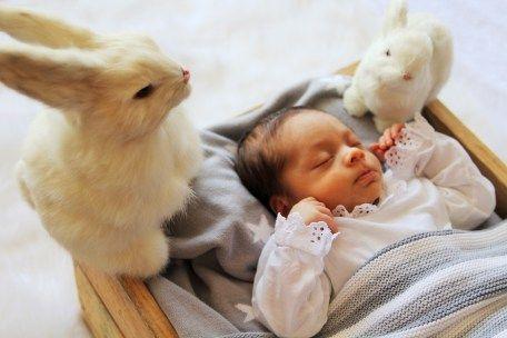 Habiaunavezunafoto conejos