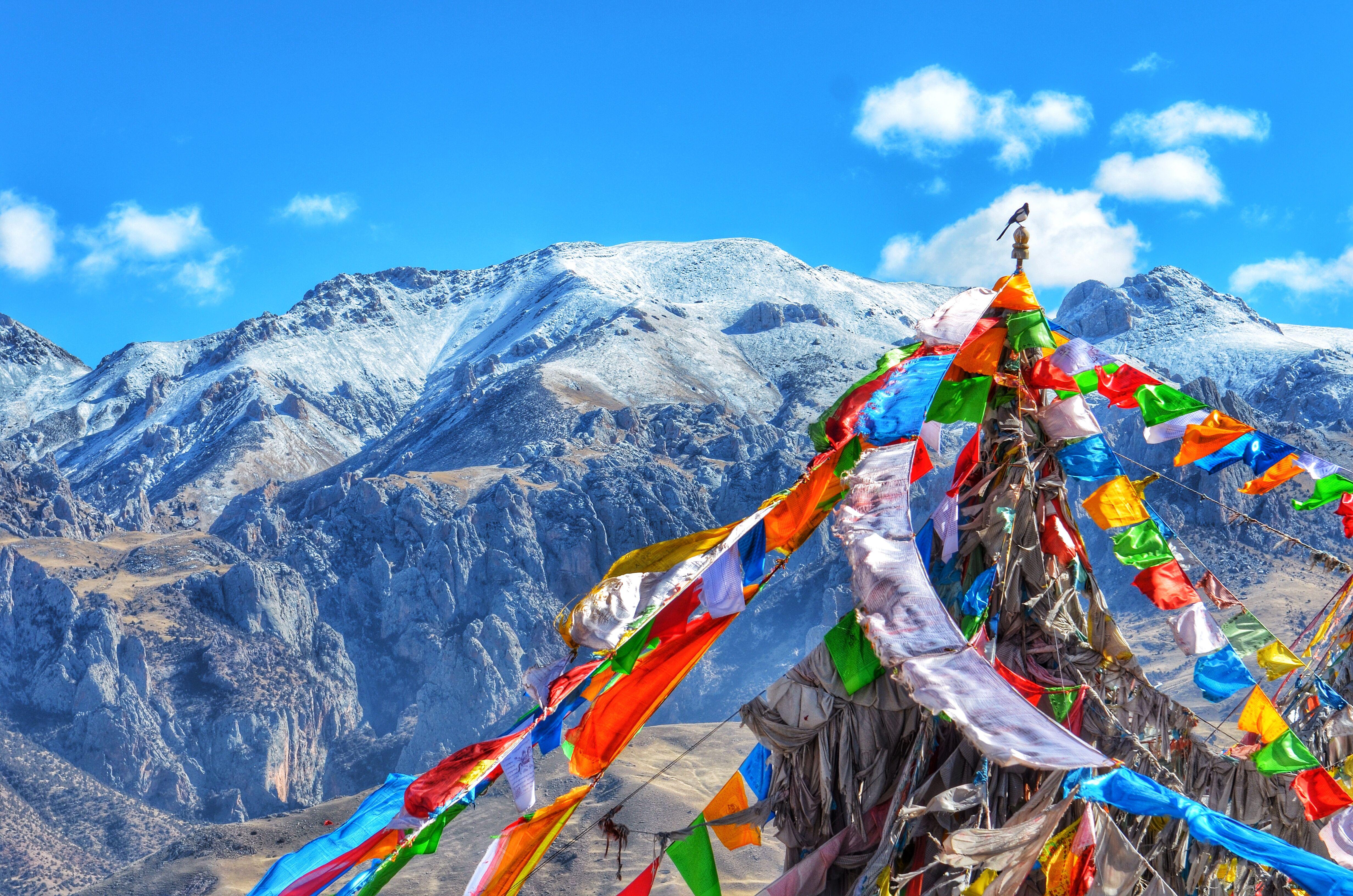 tibetan mastiff hd wallpapers | hd wallpapers | pinterest | tibet