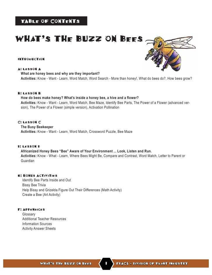 Buzz On Bees Lesson Plan  Teaching Ideas    Bees