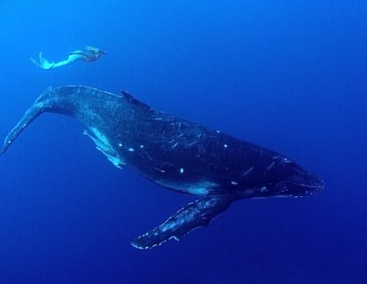 real life mermaid swimming with whale