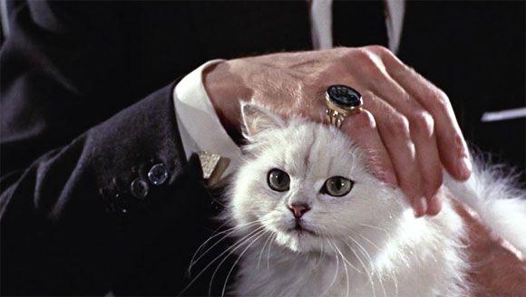 White Cat Of Evil Blofeld Gatos Laberintos Dasmas