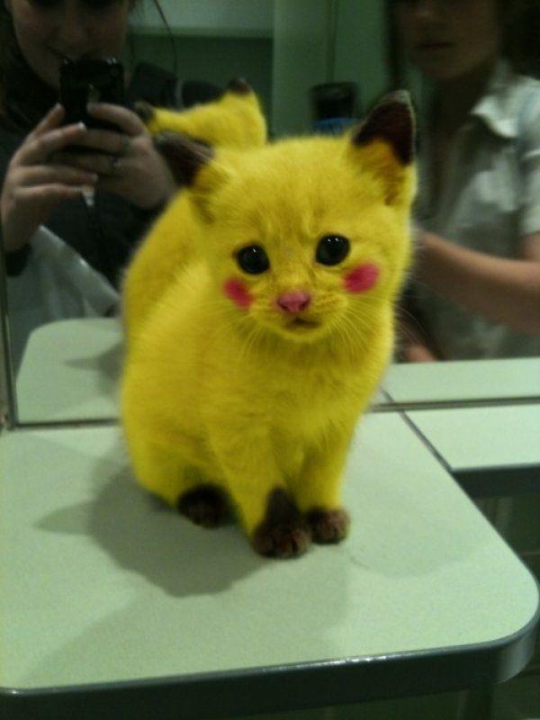 Pikachu kitty!!!<3