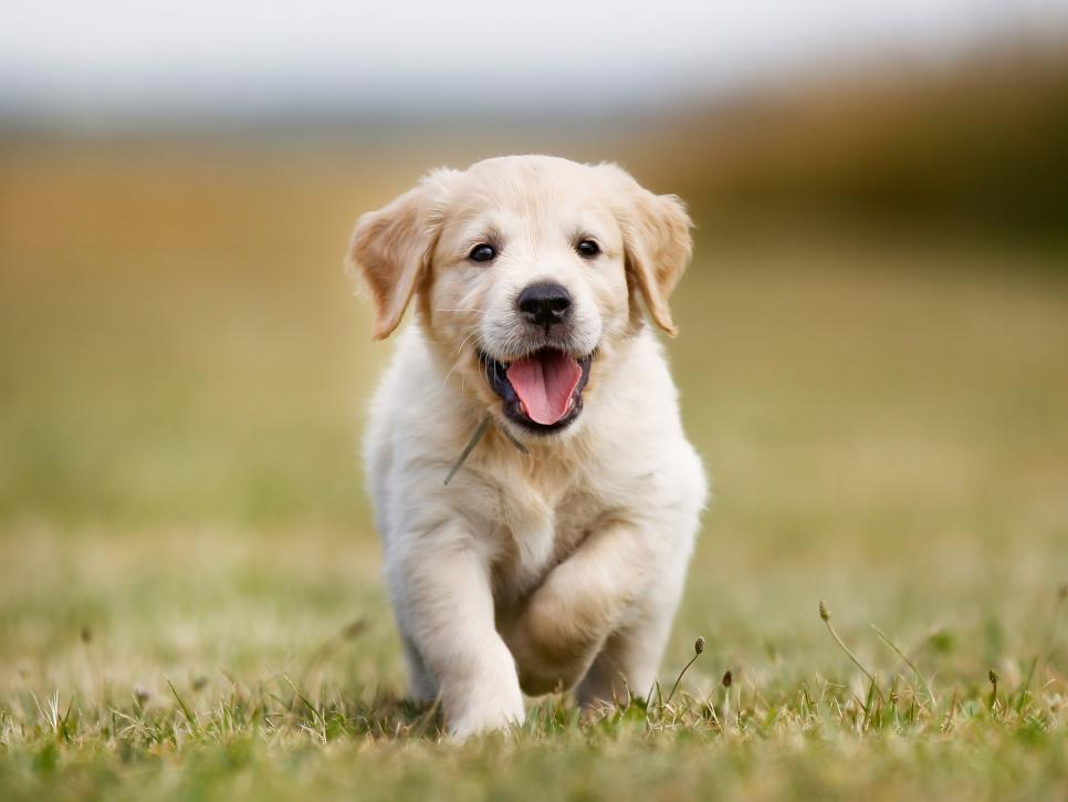 Cute Puppy Pictures In Honor Of National Puppy Day Hgtv In 2020