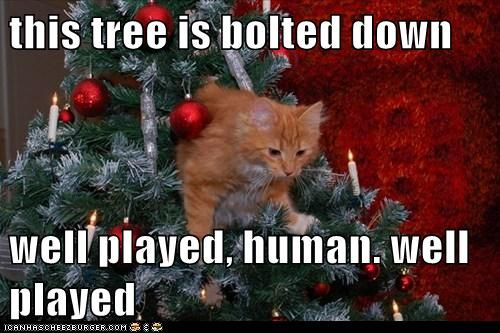 this tree is bolted down | Christmas cat memes, Christmas ...
