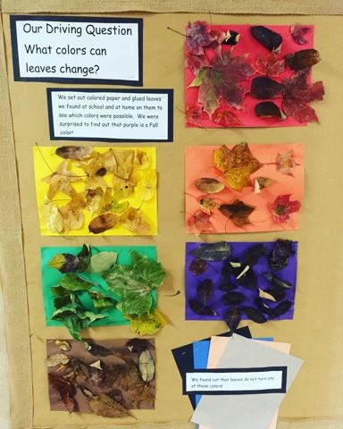 Investigating the Colors of Leaves