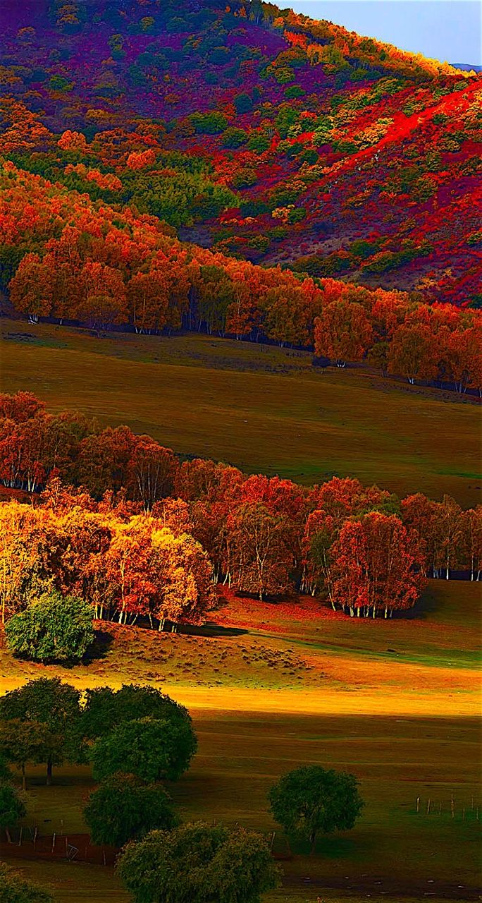 Autumn hills ... scrollable vertical panoramic beauty #autumnfoliage