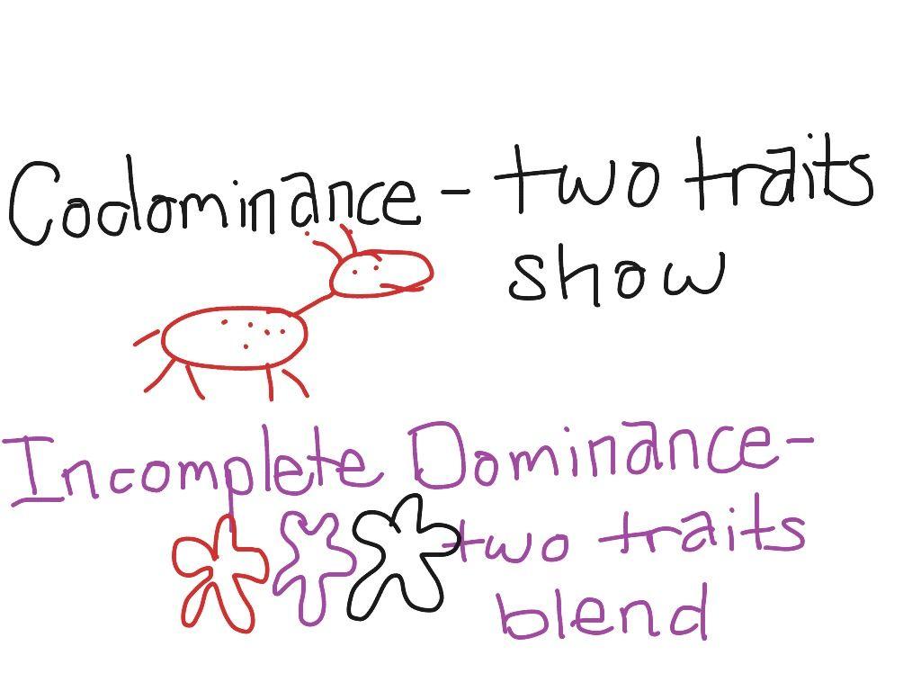 Incomplete Dominance Vs Codominance