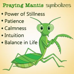 Good Mantis Praying Seeing Is Luck A