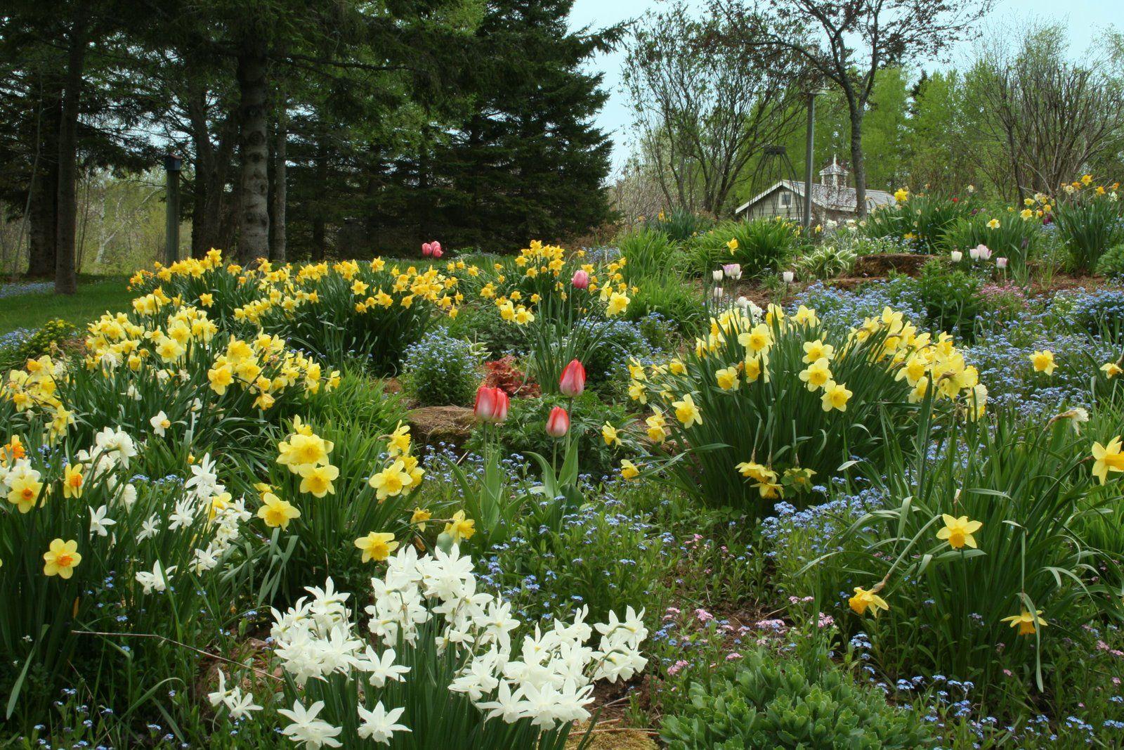 Tulips and daffodiles Spring garden, Dream garden