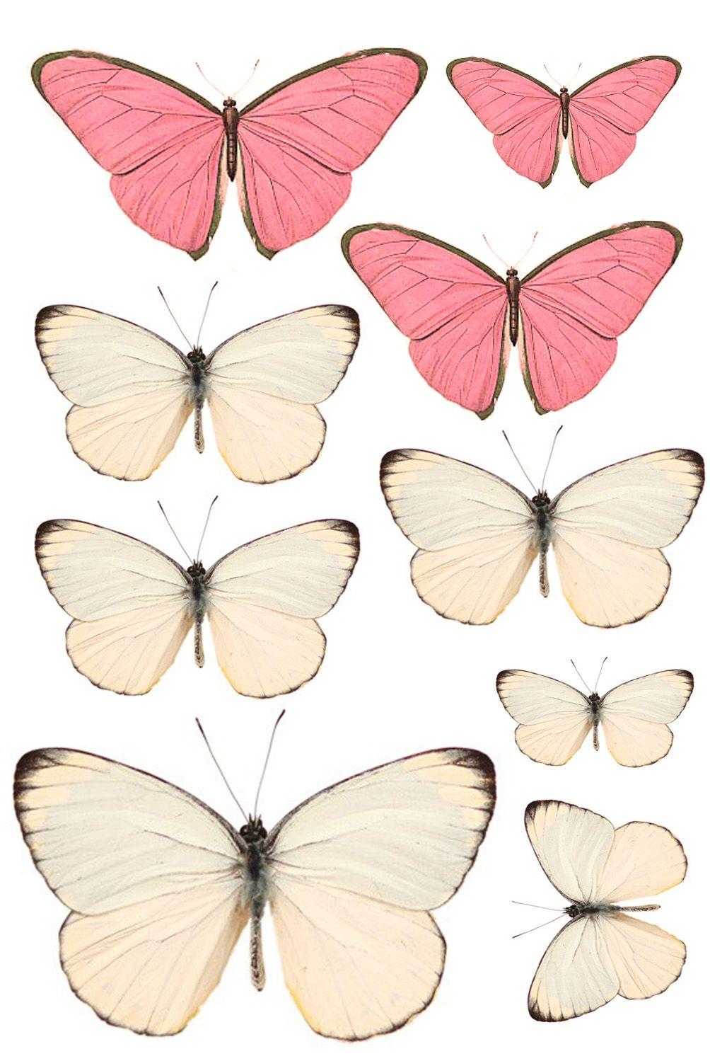 mariposas rosadas | decoupage | Pinterest | Mariposa rosa, Mariposas ...