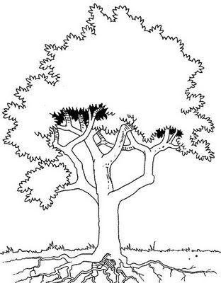 Desenhos De Arvores Para Colorir Pintar Imprimir Arvore Para