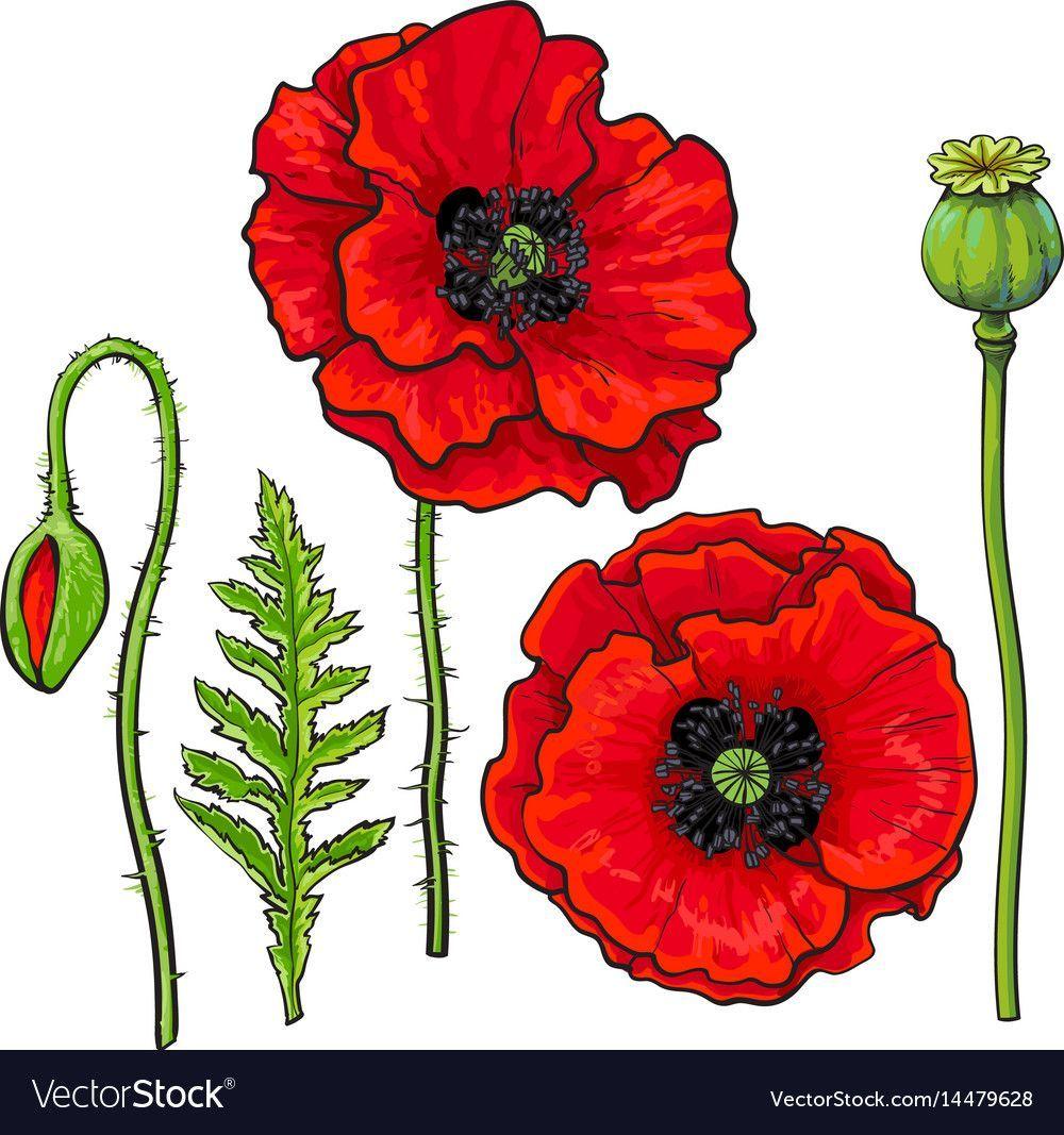 Pin by Alberto on poppy flowers in 2020 Poppy flower