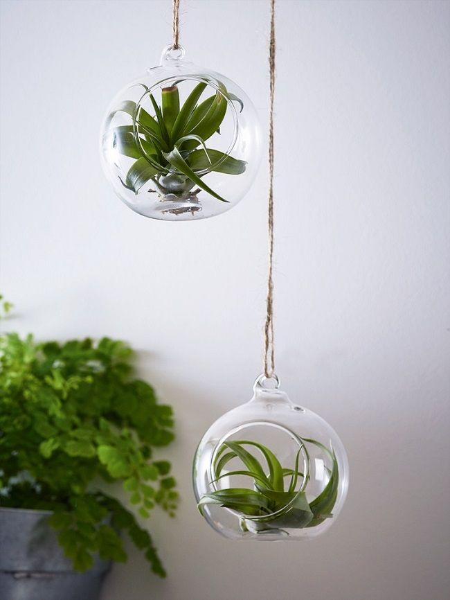 Indoor Hanging Plant Pot Holders Trend Hanging Air Plants Plant Pot Holders Hanging Plants