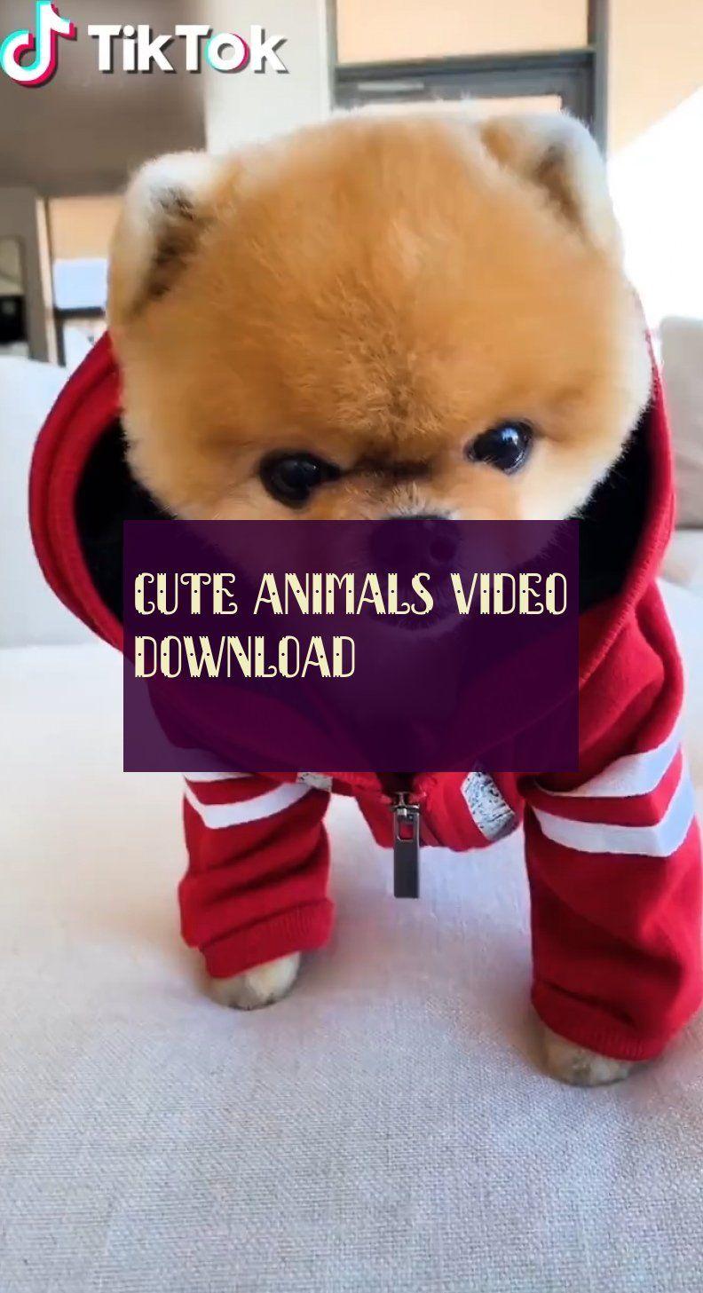 Animaux Mignons Téléchargement Vidéo Cute Animals Video Download