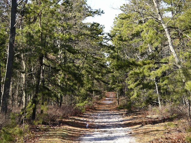 The new jersey pine barrens essay