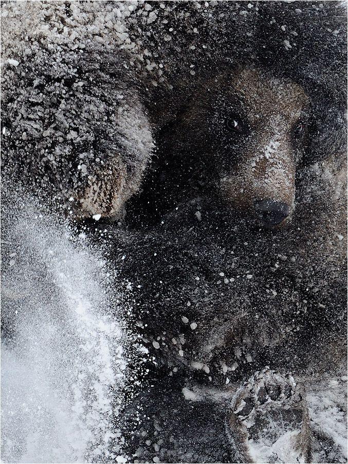 Schneegestöber von P. Lindel