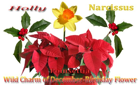 December S Birth Flower Is The Narcissus Which Embodies The Idea That You Want Your Beloved To Stay Jus December Birth Flower Birth Flowers Birth Month Flowers