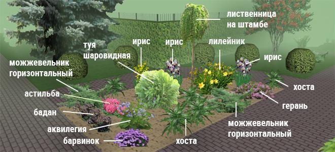 Клумбы непрерывного цветения схемы с описанием цветов