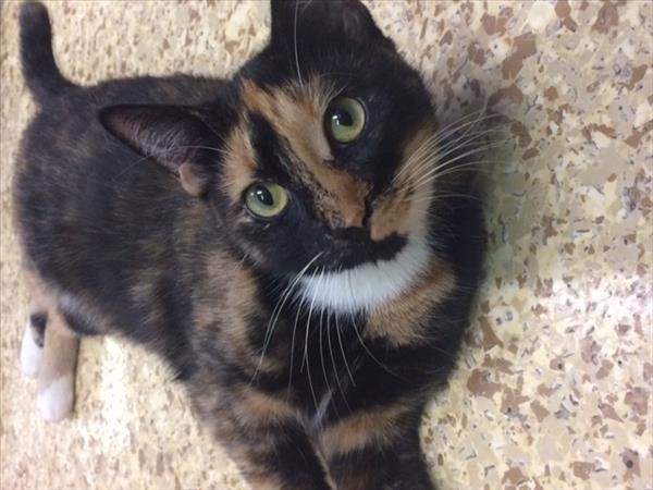 Hiya I M Peanut Nice To Meet You I M A Super Sweet Girl Who Is Looking For Her Forever Home Could It Be Yours I Love To Pla Cuddling Adoption Nice To