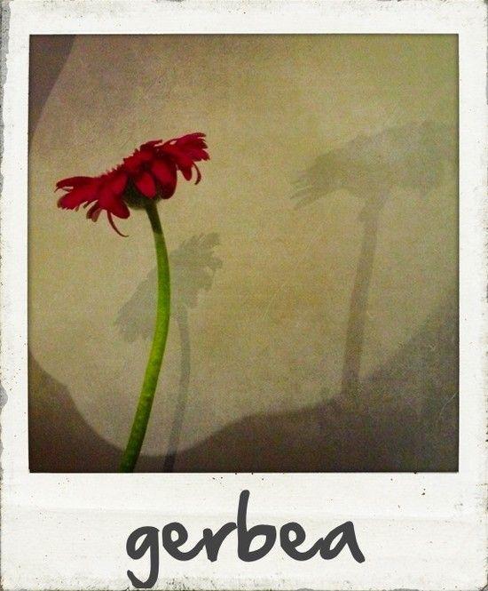 Polaroid: Framed flower... © bormaennchen