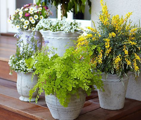Mosquito-Repelling Potted Plants - Everyday Shortcuts