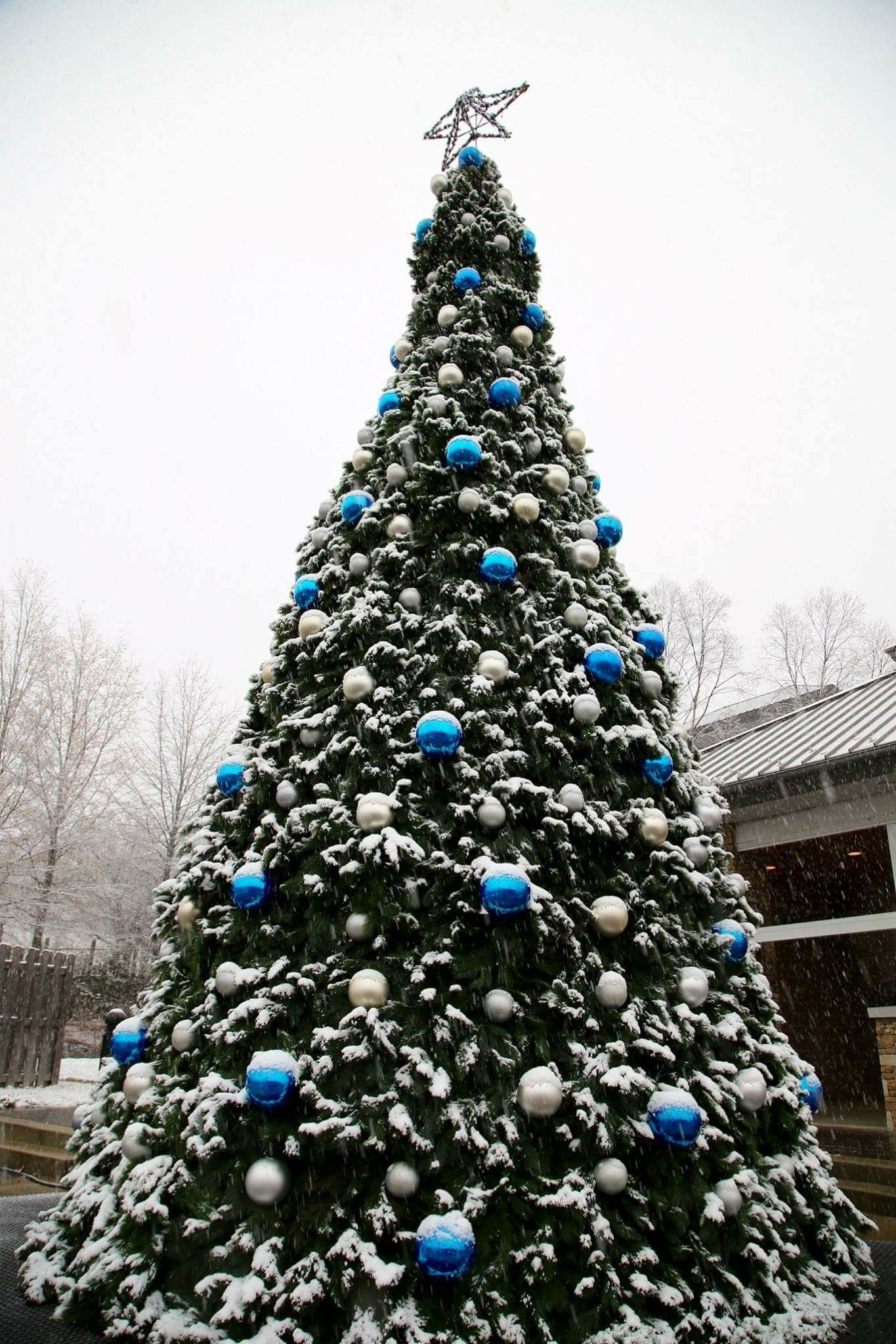 Gatlinburg\'s Christmas tree, 12-8-17   Kit Kat\'s Gatlinburg ...