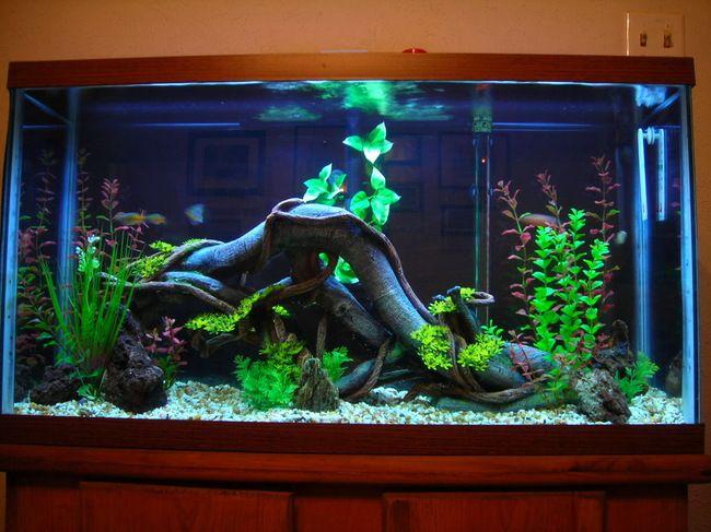 fish tank ideas   Fish Tank Setup - Perth-WRX.com   Aquariums ...