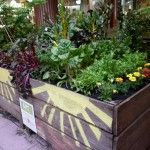 Painted wooden planters