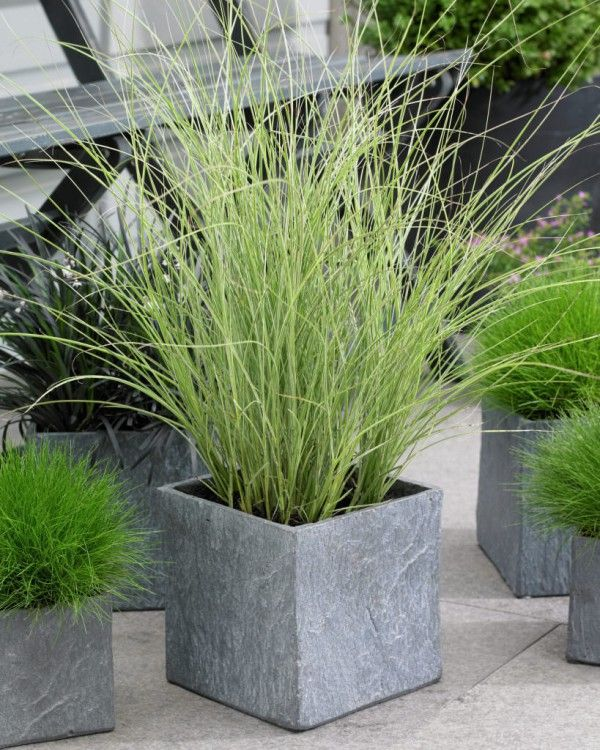 Best ornamental grasses for containers and how to grow for Planting plans with grasses