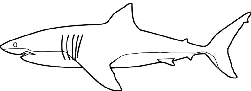 Gambar Mewarnai Ikan Hiu Wwwimagenesmicom