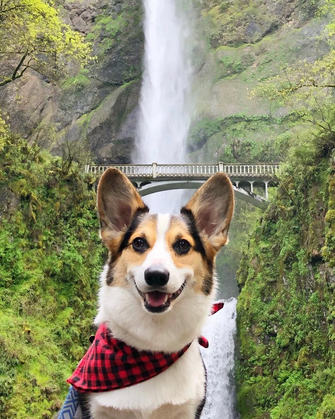Multnomah Falls, Oregon. Dog travel