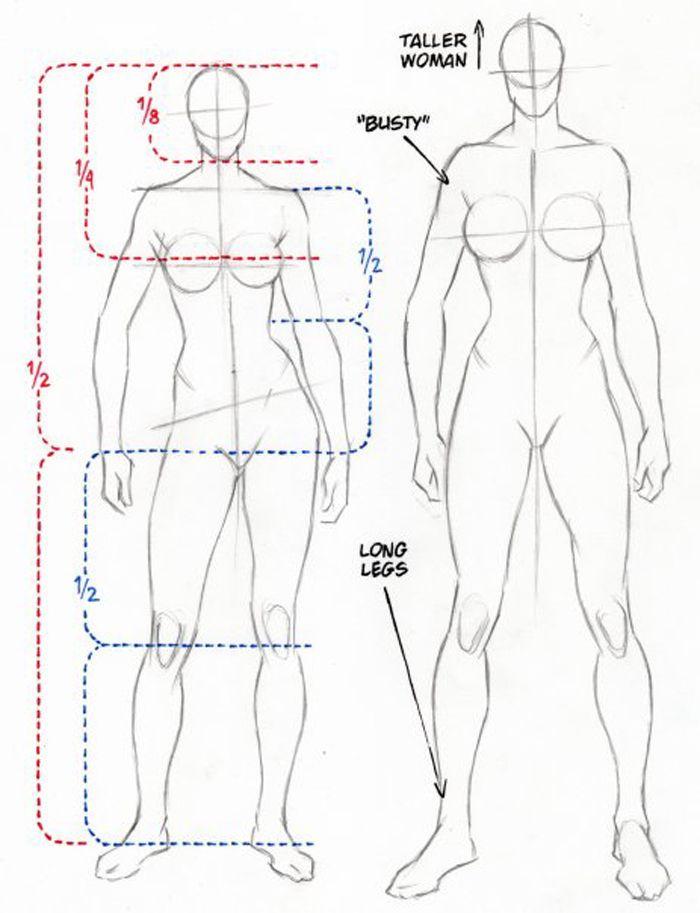 Anatoref Female Anatomy Reference Top Row Row 2 Drawing