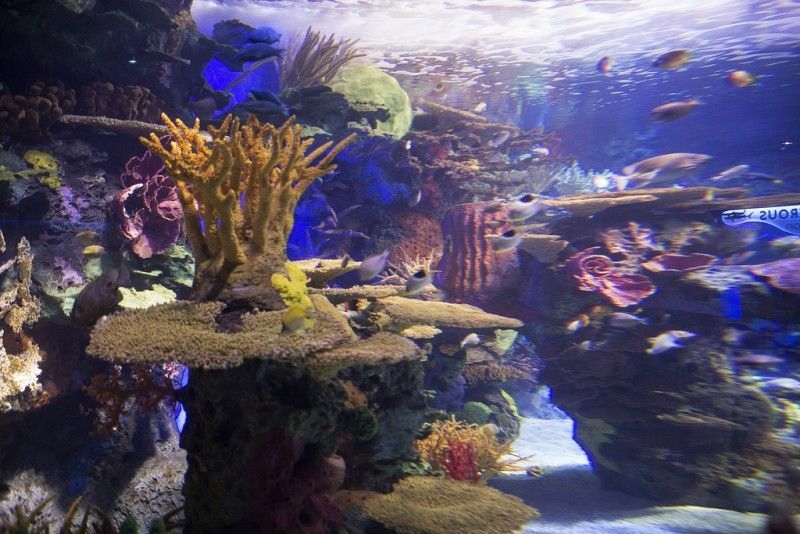 Ripley̥s Aquarium of Canada Canada is a North American region extending from the U.S. located in the south to the��_
