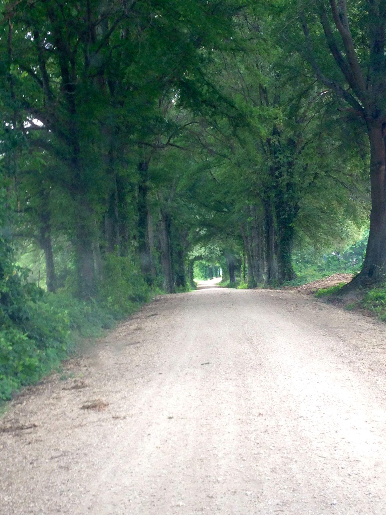 I love roads like this...I always drive slow down them. sixmillionstories.com