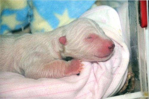 Help Name a Baby Polar Bear! (I entered JACKSON!!!)