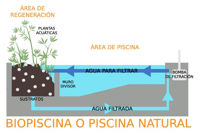 Piscina natural o biopiscina blog tools4pro espa a for Como hacer una piscina natural