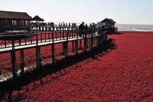 Red beaches of China