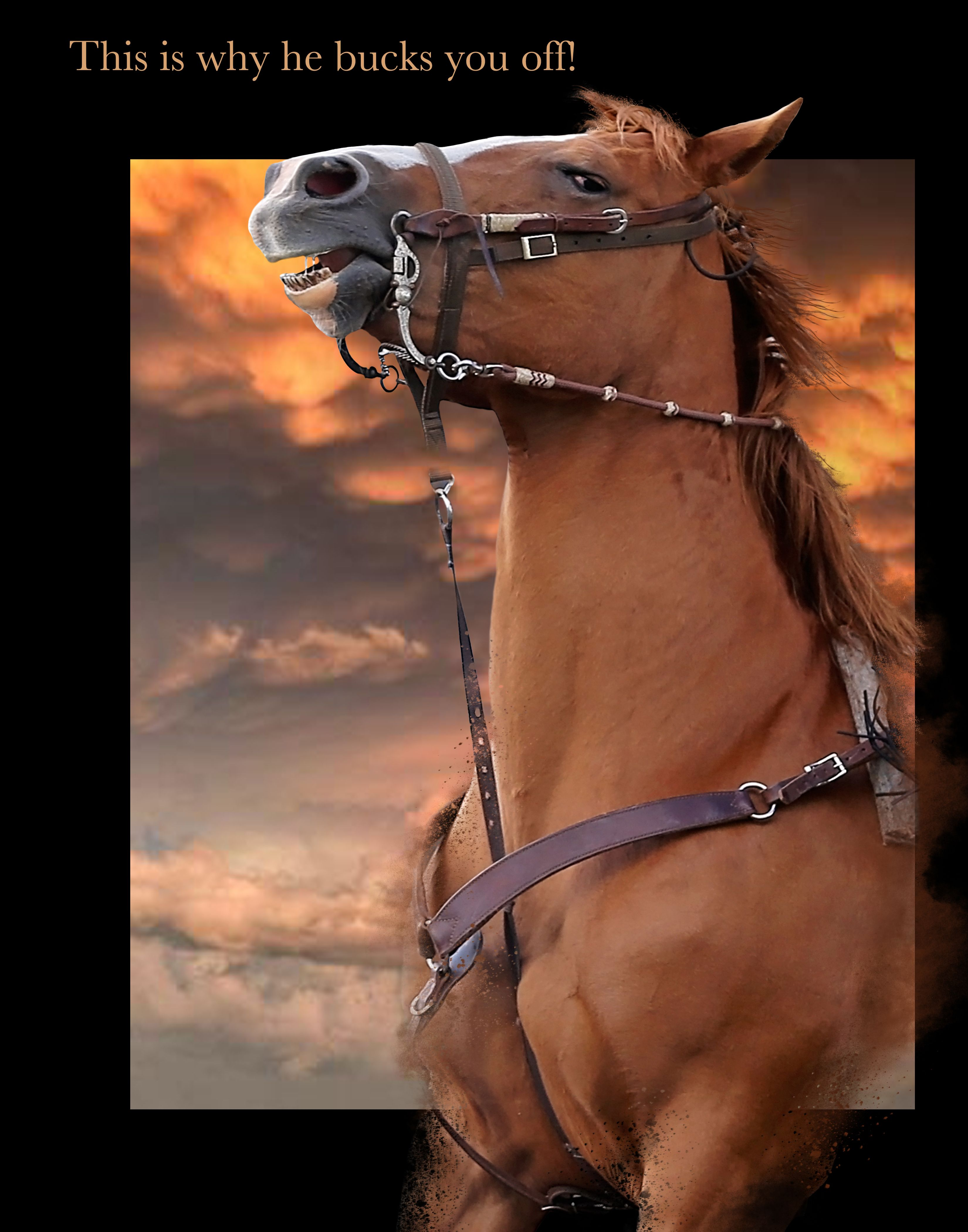 this image is just one of the equine expressions featured in linda rh pinterest com