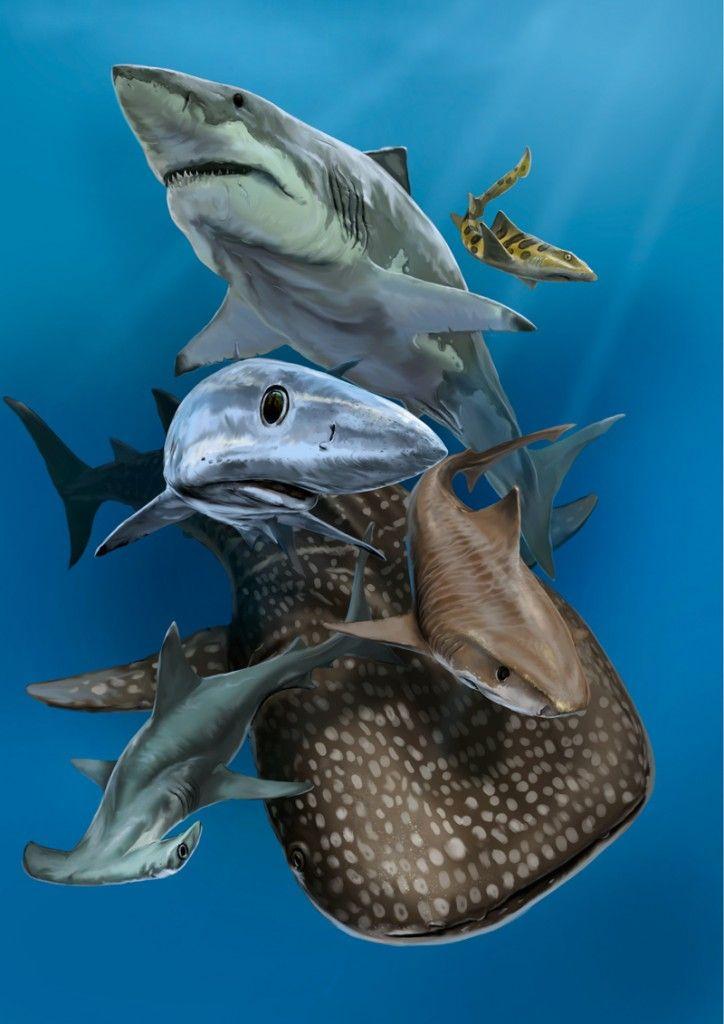 #Tietokonemaalaus #luonto #CG #Heikinkuvituspaja #Hai #digital_art #Shark #Ocean #nature #illustration